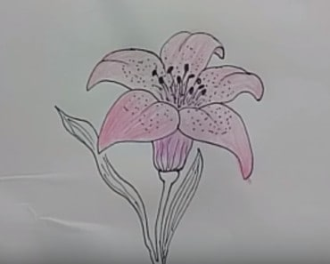 How to Draw A Lily Flower Easy step by step for kids