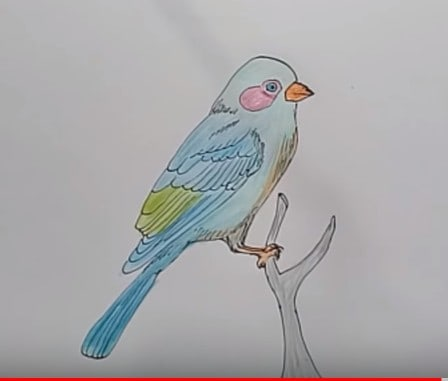 How To Draw A Bird For Kids