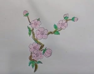 How to draw Cherry Blossom for kids