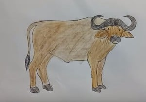 How to draw a Buffalo step by step easy for kids