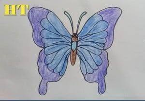 How to draw a cute cartoon butterfly