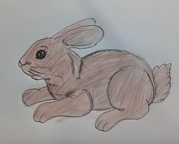 How to draw cute rabbit