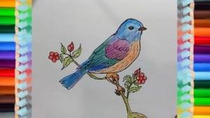 Draw Eastern-Bluebird spring