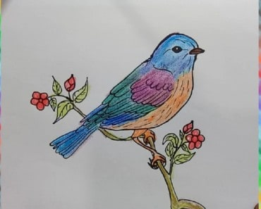 Draw Eastern-Bluebird spring