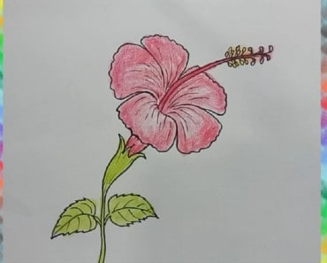 How To Draw A Hibiscus Flower and learn colors for kids