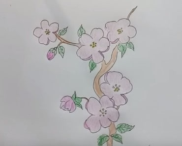 How to Draw Cherry Blossoms step by step, easy!