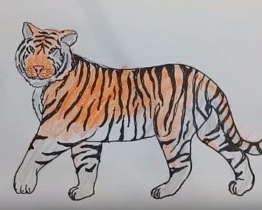 How to draw a Tiger step by step [Narrated Step-by-Step Tutorial]