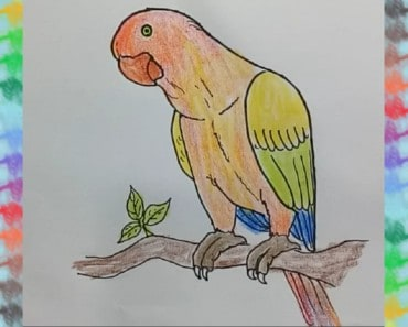 drawing-of-a-parrot-drawing-for-kids-parrot-printable-editable