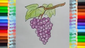 How To Draw Grapes For Kids