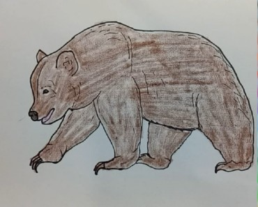 How to draw a bear easy step by step