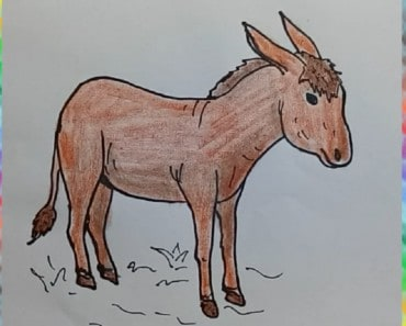 How to draw donkey