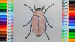 how to draw a bug (maybug)