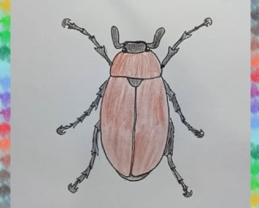 how to draw a bug (maybug)