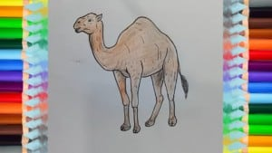 How to Draw a Camel Easy