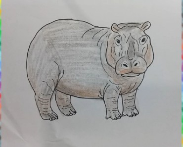 How to draw hippopotamus