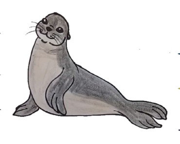 How To Draw A Seal step by step - Seal drawing and coloring