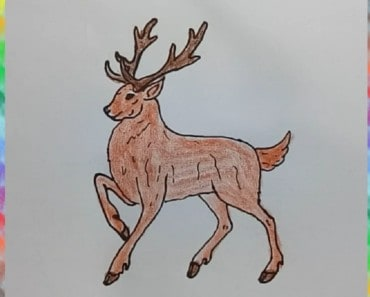 How to draw A Reindeer