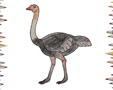 how to draw a ostrich step by step easy