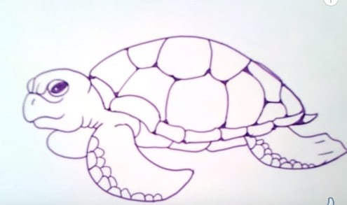How To Draw A Sea Turtle Easy Step By Step