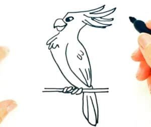 How to Draw a Cockatoo easy step by step