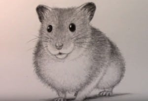 How to Draw a Hamster easy step by step