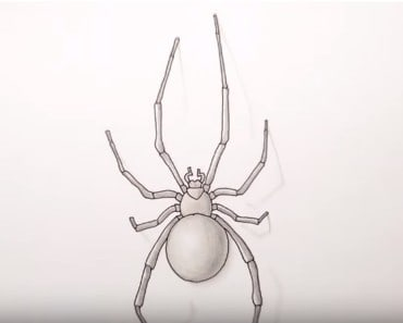 How to Draw a Spider easy Step by Step