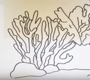 How to Draw an Acropora