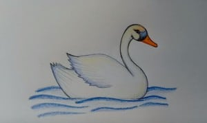 How to draw a Swan easy step by step