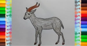 How to draw an antelope step by step