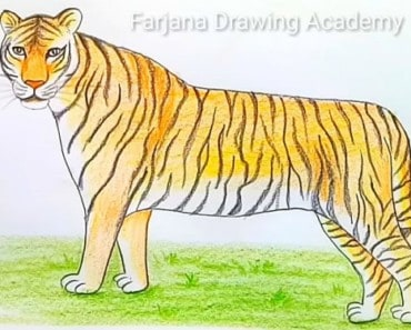 How to draw a bengal tiger step by step