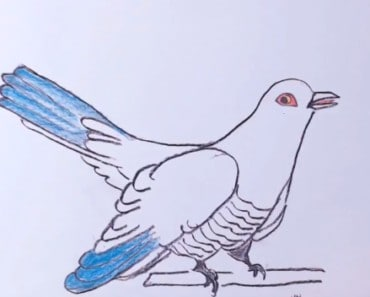 How to draw a cuckoo bird easy step by step