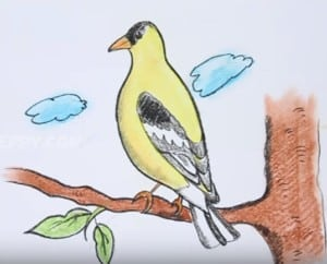 How to draw a goldfinch bird easy step by step