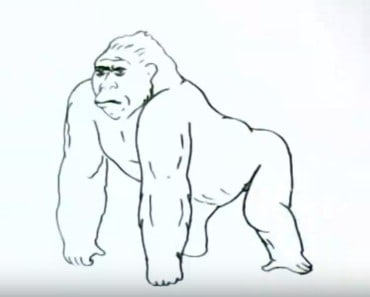 How to draw a gorilla easy step by step