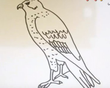 How to draw a hawk easy step by step