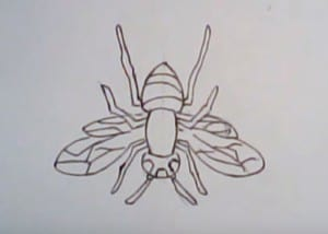 How to draw a hornet
