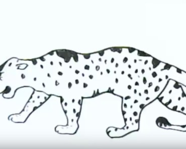 How to draw a jaguar easy step by step