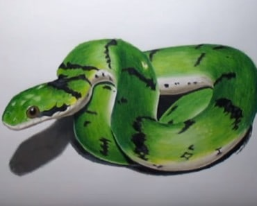 How to draw a snake 3D