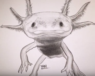 How to draw an axolotl step by step easy