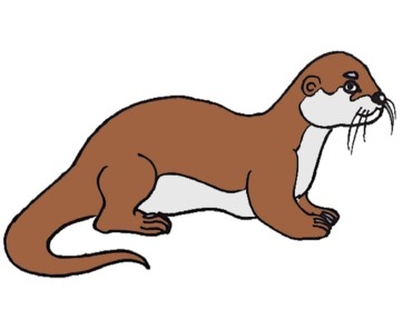 How to draw an otter cute and easy step by step