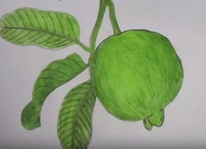 How to draw guava step by step easy