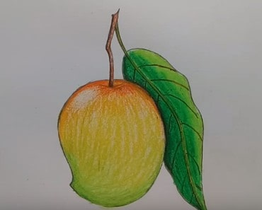 How to draw mango fruit step by step