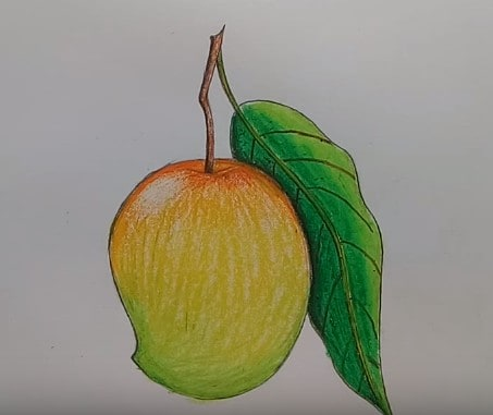 How To Draw Mango Fruit Step By Step Fruits Drawing
