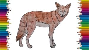 How to Draw a Coyote step by step easy - Easy animals to draw