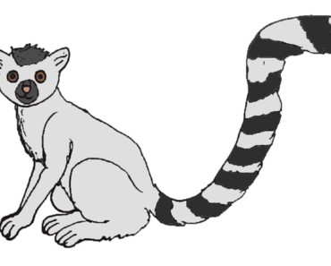 How to Draw a Lemur step by step - Easy animals to draw