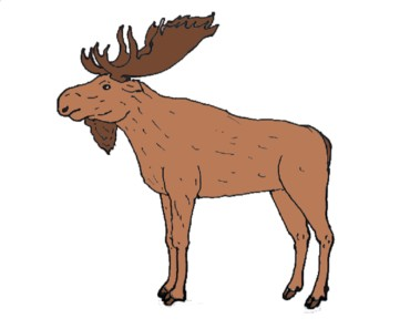 How to Draw a Moose step by step easy - Easy animals to draw