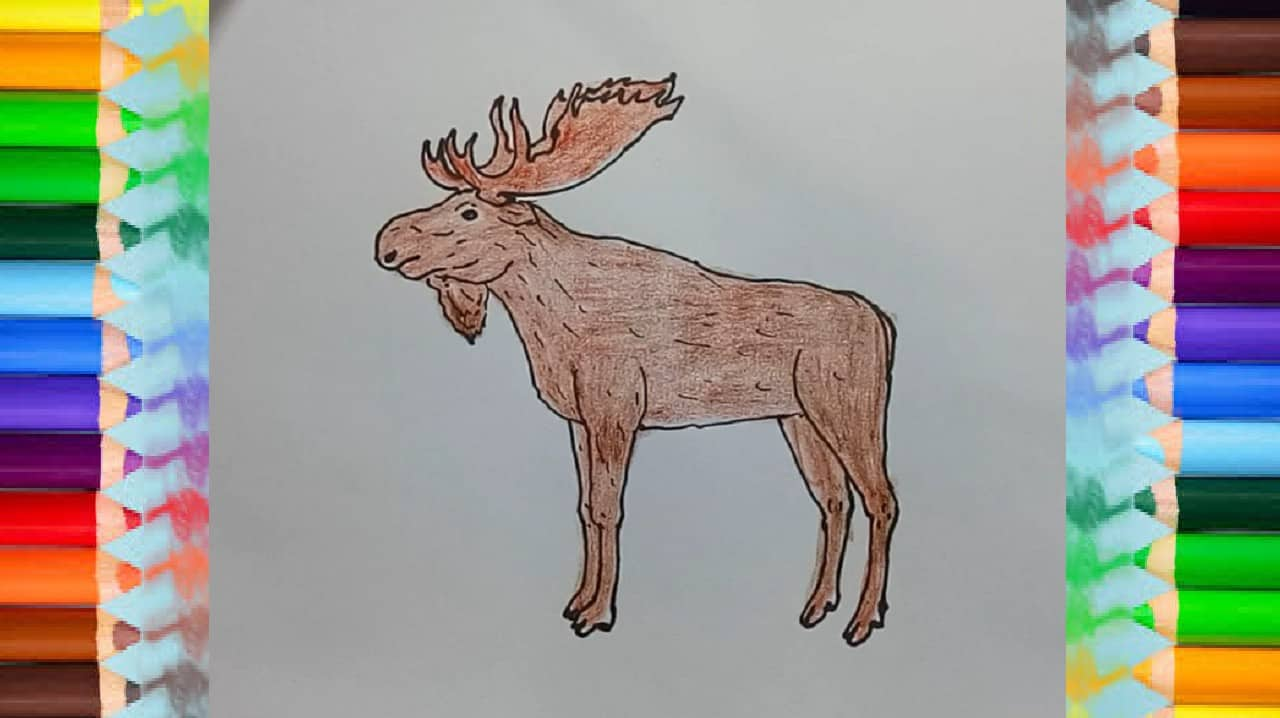 How To Draw A Moose Step By Step Easy How To Draw Step By Step