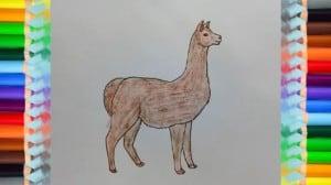 How to Draw an Alpaca step by step