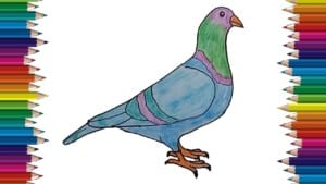 How to draw a Pigeon step by step easy - Easy bird to draw