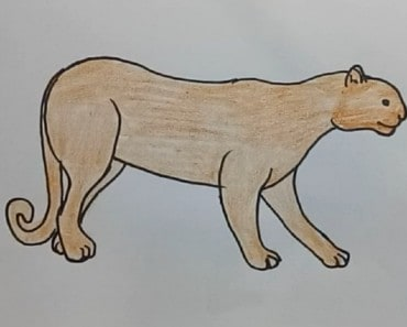 How to draw a puma easy step by step