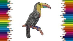 How to draw a toucan step by step easy